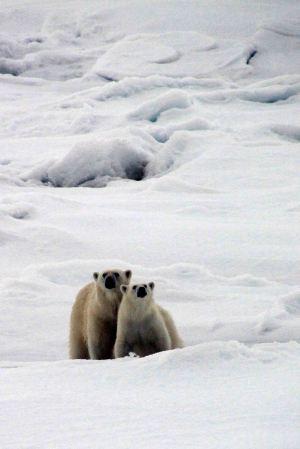 IMG_9032 polar bears adventuresofacouchsurfer
