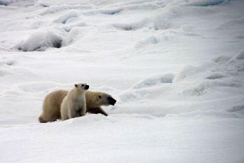 IMG_9035 polar bear adventuresofacouchsurfer