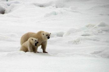IMG_9039 polar bear adventuresofacouchsurfer