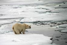 IMG_9061 polar bears adventuresofacouchsurfer
