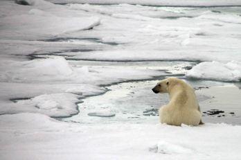 IMG_9068 polar bear adventuresofacouchsurfer