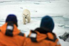 IMG_9078 polar bear adventuresofacouchsurfer