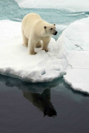 IMG_9097 polar bear adventuresofacouchsurfer