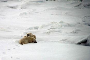 IMG_9099 polar bears adventuresofacouchsurfer