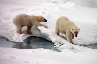 IMG_9114 polar bears adventuresofacouchsurfer