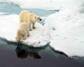 IMG_9142 polar bears adventuresofacouchsurfer