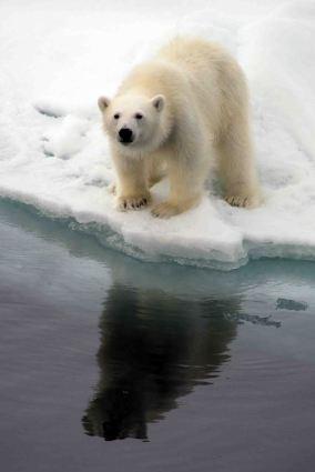 IMG_9143 polar bear adventuresofacouchsurfer
