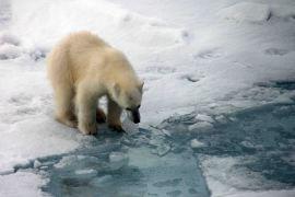 IMG_9156 polar bear adventuresofacouchsurfer