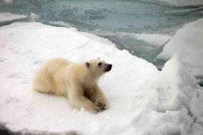 IMG_9158 polar bear adventuresofacouchsurfer