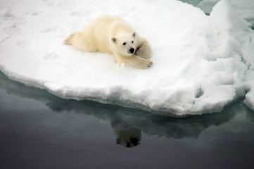 IMG_9162 polar bear adventuresofacouchsurfer