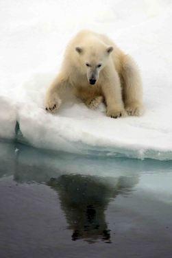 IMG_9186 polar bear adventuresofacouchsurfer
