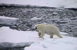 IMG_9342 polar bear adventuresofacouchsurfer