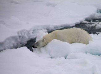 IMG_9389 polar bear adventuresofacouchsurfer
