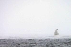 IMG_9473 polar bear