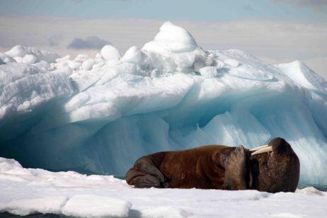 IMG_9719 walrus adventuresofacouchsurfer