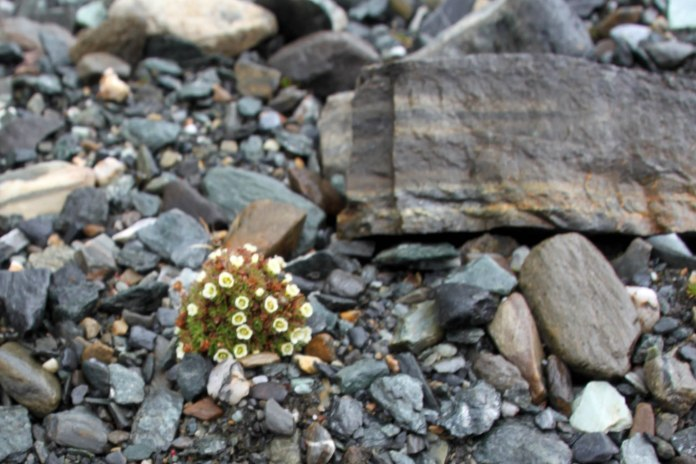 IMG_9840 flowers adventuresofacouchsurfer