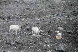 IMG_9845 reindeer adventuresofacouchsurfer