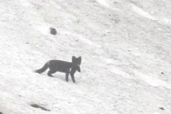 IMG_9909 fox adventuresofacouchsurfer