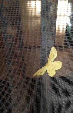20160710_130655913_iOS moth