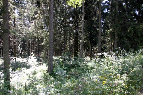 IMG_0372 forest