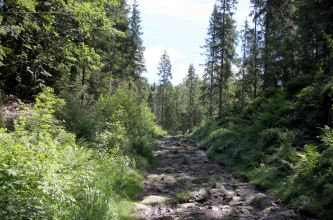 IMG_0374 trail