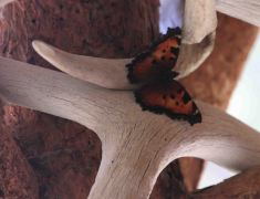 IMG_0468 butterfly