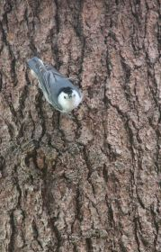 IMG_0528 bird
