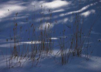 img_9495-grass