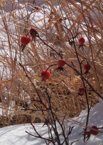 img_9524-berries