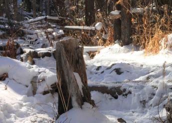 img_9525-stump