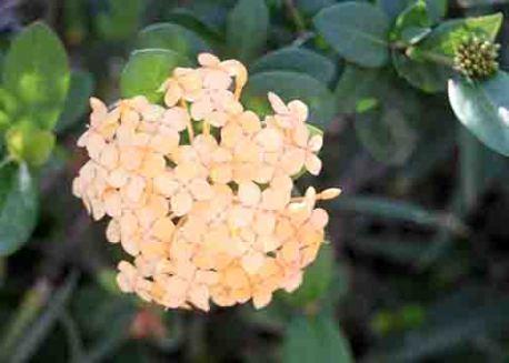 img_9623-flower