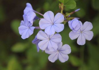img_9639-flowers