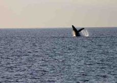 img_9676-whale