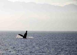 img_9696-whale
