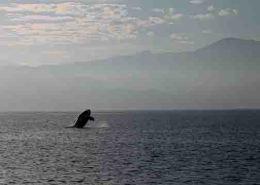 img_9698-whale