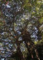 img_9728-tree