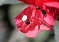 img_9743-flower