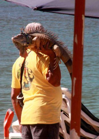 img_9766-iguana