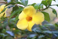 img_9809-flower