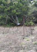 20170122_181251011_ios-spider