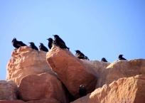 img_0190-birds