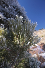 img_0552-frost