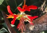 20170207_221631217_ios-flower