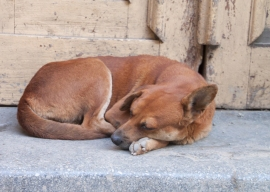 dog by our home stay