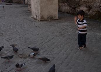 img_1995-pigeons