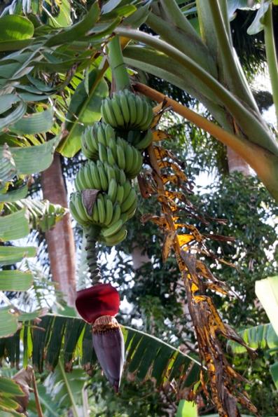 img_2107-bananas