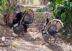img_2187-turkey
