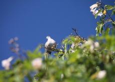 img_2239-bird