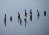 img_2243-birds