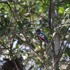 img_2312-bird